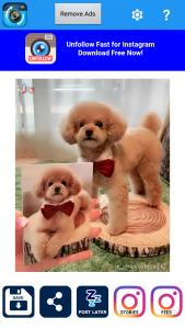 2 cara repost instagram regrann